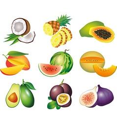 fruits exotic set vector image