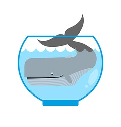 Whale in Aquarium Large sea animal is not put into vector image vector image