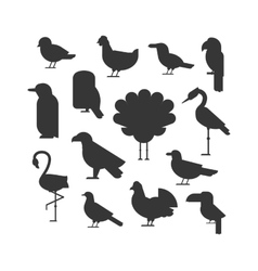 Collection of nature black bird wildlife vector image