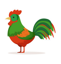 Colorful cock poultry breeding vector