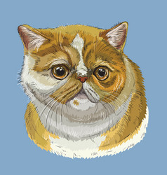 Colorful exotic shorthair cat vector