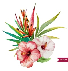 Nice tropical flowers vector image