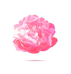 realistic pink peony flower isolated vector image