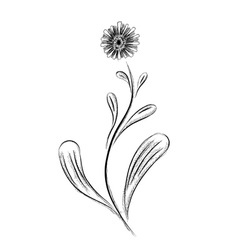 simple flower isolated on the white vector image