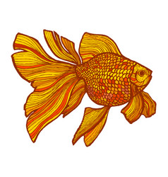 colored goldfish in hand-drawn style vector image