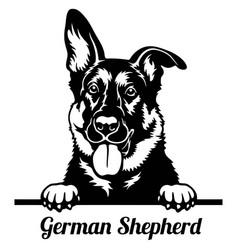 German shepherd peeking dog - head isolated on vector
