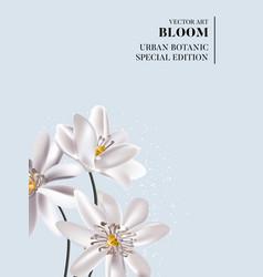 wedding white flowers tender soft bloom greeting vector image