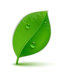 glossy green leaves vector image