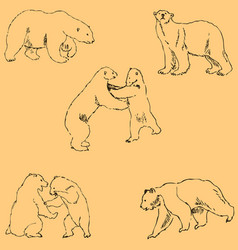 the bears sketch by hand pencil drawing by hand vector image