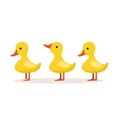 three cute cartoon ducklings characters standing vector image vector image