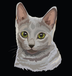 Colored russian blue cat vector
