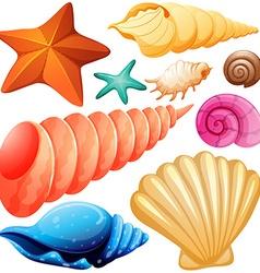 Different types of seashells vector