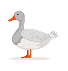Domestic goose poultry breeding vector