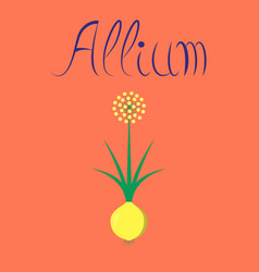 Flat on background plant allium vector