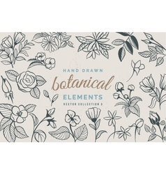 Hand Drawn Botanical Elements vector