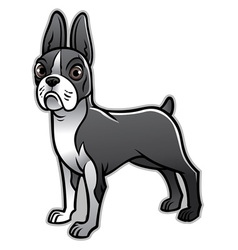 cute boston terrier dog vector image vector image