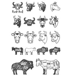 big set of cow heads and silhouettes design vector image vector image