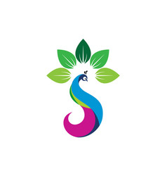 Beauty peacock letter s leaves logo icon vector
