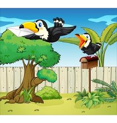 Birds at the backyard vector