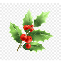 christmas holly twig realistic vector image