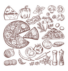italian pizza with different ingredients vector image