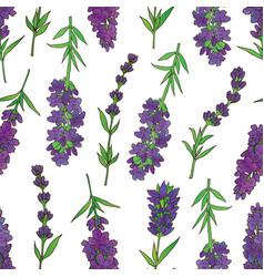 Lavender-03 vector