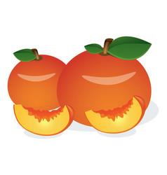 Peach fruit vector