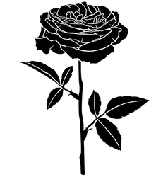 rose rose vector image