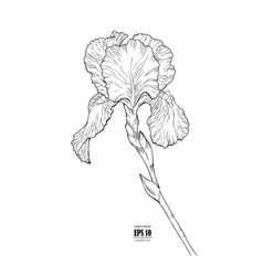black and white outline flower iris hand drawn vector image