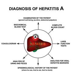 Diagnosis hepatitis a world hepatitis day vector