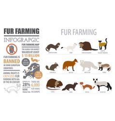 fur farming infographic template flat design vector image