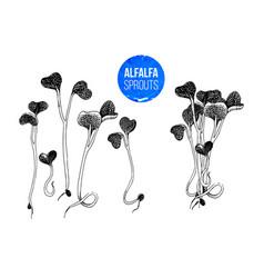 hand drawn alfalfa sprouts - kai wah-rei vector image