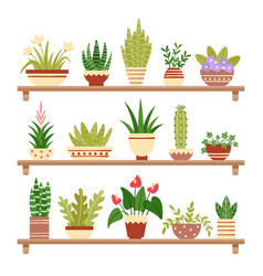 houseplants on shelf flower in pot potted vector image