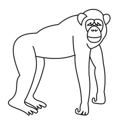 Marmoset monkey icon outline style vector