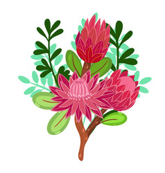 Bouquet with protea isolated on a white background vector