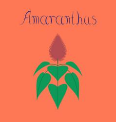 Flat on background herb amaranthus vector