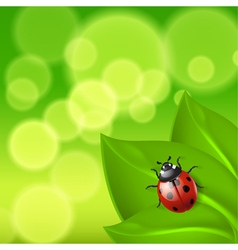 Green background with ladybird vector