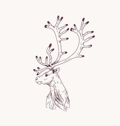 outline portrait male red deer hart or stag vector image