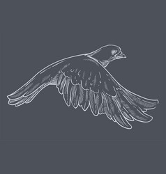 pigeon or dove flying wild bird isolated sketch vector image