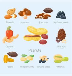 piles of different nuts pistachio hazelnut almond vector image