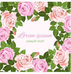pink and beige roses frame on the white background vector image