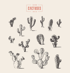 Set cactus hand drawn sketch vector