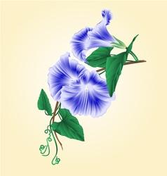 Flower Morning glory blue vintage vector image vector image