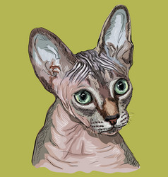 Colorful sphynx cat vector