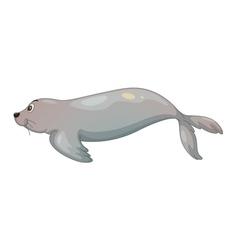Seal fish vector