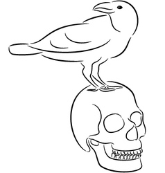 Skull and raven vector image vector image