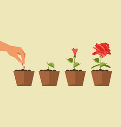 the process of plant growth vector image