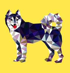 Siberian husky dog low polygon style vector image vector image
