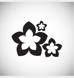 Bali flowers on white background vector