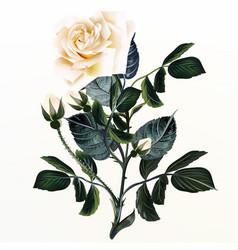 Elegant beige rose in vintage style vector